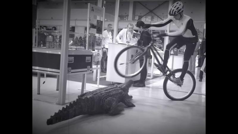 Шоу с крокодилом Велошоу Велотриал