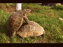 Turtle pairing. Funny sounds