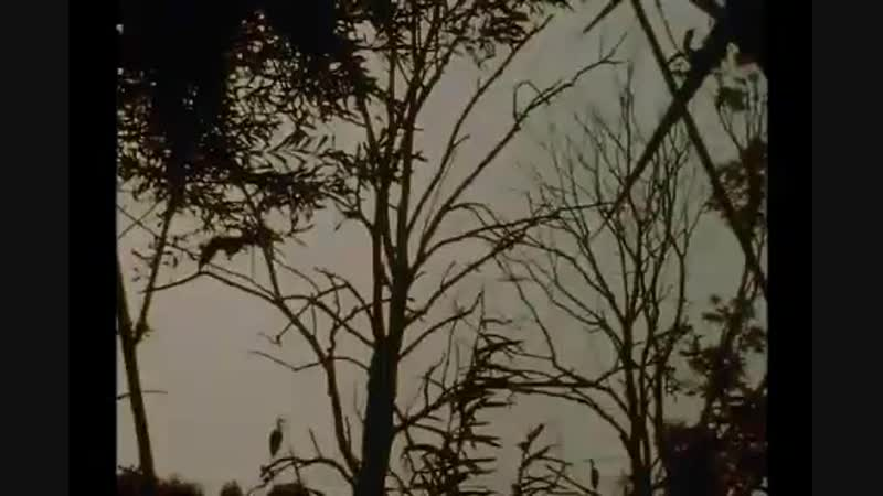 Lothar Baumgarten - The Origin of the Night (Amazon Cosmos) [1973-77]