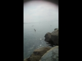 Отдыхающие ,Черноморское побережье, Джубга,+32