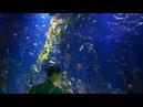 Oceanografic Aquarium Valencia 11