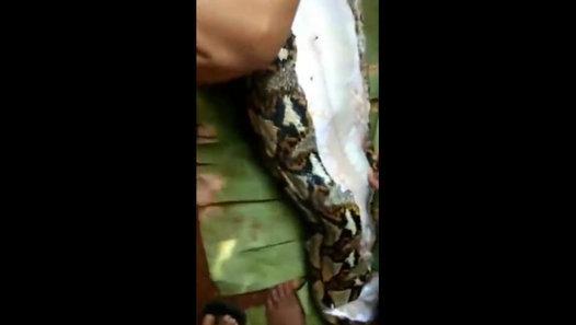 VIDEO VIRAL | ULAR PITON TELAN MANUSIA HIDUP-HIDUP di SULAWESI - Video Dailymotion