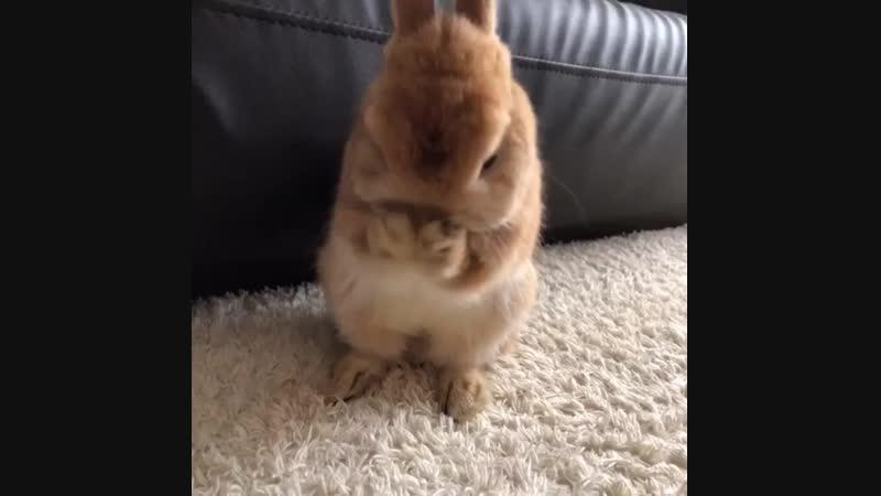 見飽きない…_rabbit_ - うさぎ- ネザーランドドワーフ- 愛兎- ペット- オレンジ - ふわもこ部- netherlanddwarf - pet - rabbit - bunny ( 750 X 750 ).mp4