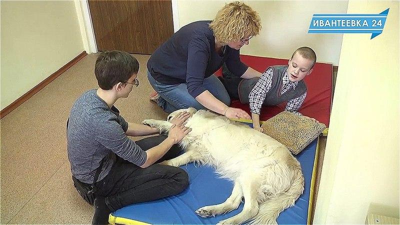 Канис-терапия: детская собака-терапевт в Ивантеевке