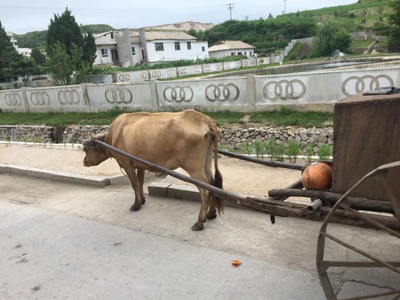 Отчет о путешествии в Северную Корею 2018. Некоторые ездят вот так