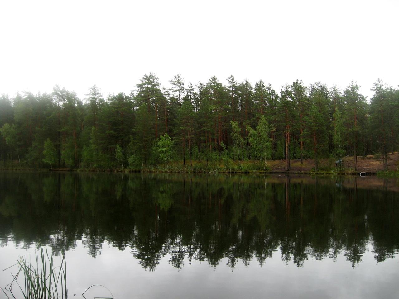 Поездка в Шалово-Перечицкий заказник (Лужский район). Край, где соединяются север и юг.