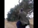 Оседлал страуса Убойные приколы