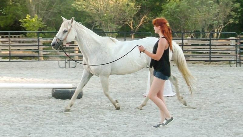 Нетрадициональная работа лошади на корде Путь к чуткости и отзывчивости