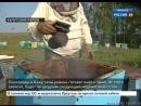 Пчеловоды в Качугском районе готовят пчёл к зиме. От этого зависит, будет ли щедрым следующий медоносный сезон