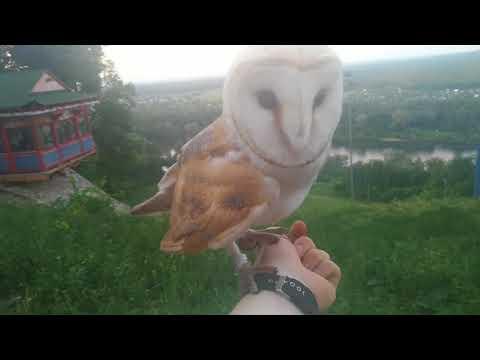 Дневник совы 2 легенда о Коре owl diary 2 The legend of Kora
