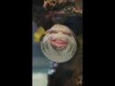 Video 435e045ecbe388c690ff7c84ce5d3dd1