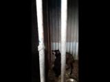 23 вольер собака в стрессе