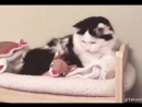 Кот, спок ночи