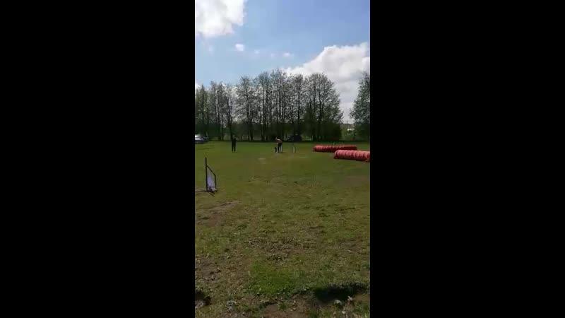 Асино первое соревнование по аджилити