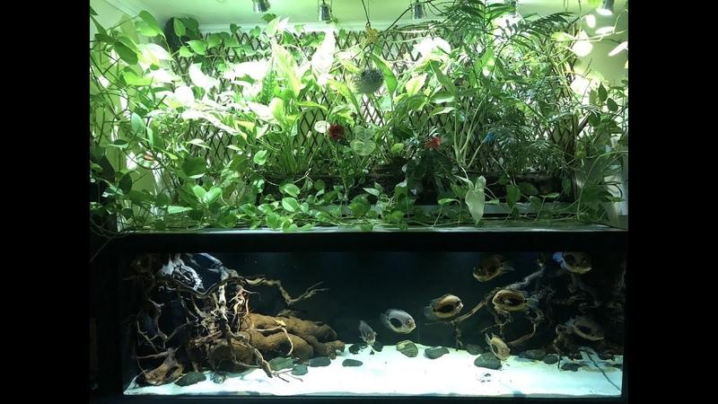 Интерактивный аквариумный туризм Сезон 4 Выпуск 9 - Моноаквариум с уару,хотя постойте ка.
