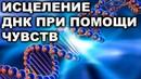 МОЛЕКУЛА ДНК МОЖЕТ ИСЦЕЛИТЬСЯ ПРИ ПОМОЩИ ЧУВСТВ ЧЕЛОВЕКА!
