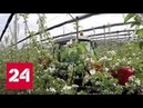 Яблоневый сад Бристоль: Миллион цветущих яблонь