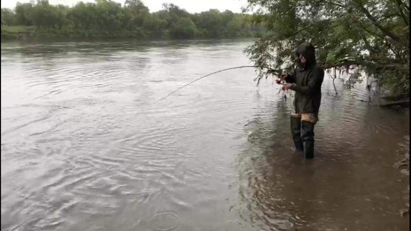 Рыбалка на кижуча, р. Авача