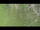 Окунь на живца Ловля окуня на пруду на верхоплавку