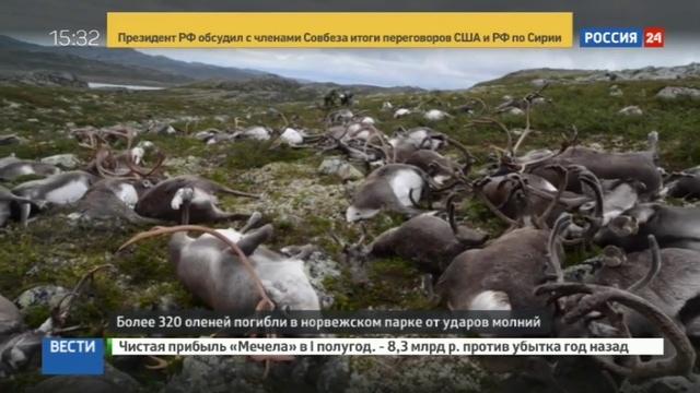 Новости на Россия 24 В Норвегии от удара молнии погибли более 300 оленей