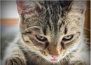 Иногда обругаешь кошку, взглянешь на нее, и возникает неприятное ощущение…