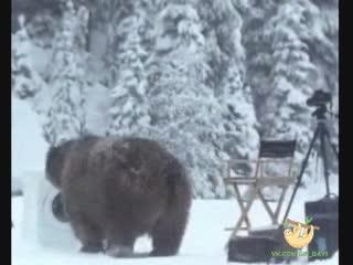 Так вот почему медведи белые
