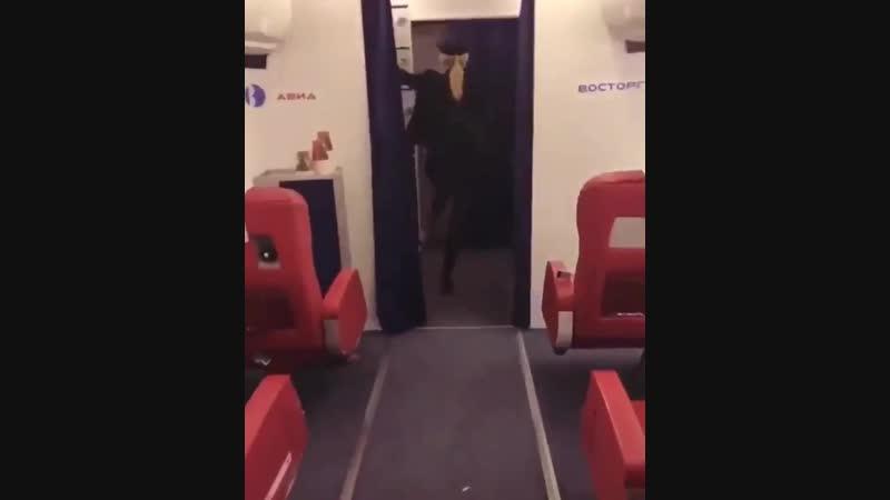 С таким пилотом ни фига не страшно.......