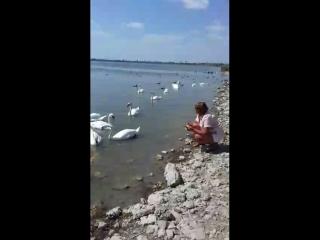 Лебединое озеро Сасык