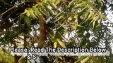 Top Benefits of Neem Leaves