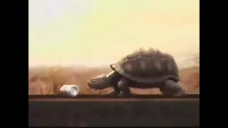 ШЕДЕВРЫ МИРОВОЙ РЕКЛАМЫ.Смешная трилогия рекламы пива Brahma с черепахой