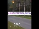 Лес в городе Питер