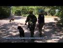 Специалисты Россоюзспас провели учебно тренировочные сборы по аттестации служебных собак