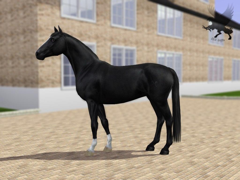 Регистрация лошадей в RHF 2 - Страница 8 W0gMwXMWq_U