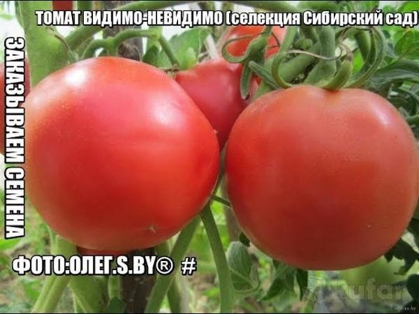 Обзор семян крупноплодных томатов 🍅 Сибирский Сад