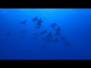 また会いに行きたいなー︎ - 現実感が無いというかなんというかとにかく神々しかった - - 1匹12mとかあるように見せない海も凄い - - ちょこちょこお裾分け出来たらなと思います - - マダラトビエイ - saipan