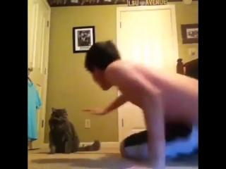 Кот в обиду себя не даст!