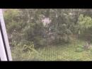 мир животных с николаем дроздовым 1