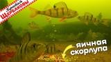 РЕАКЦИЯ ОКУНЕЙ на ЯИЧНУЮ СКОРЛУПУ. Подводные съемки. Зимняя рыбалка (Братья Щербаковы)