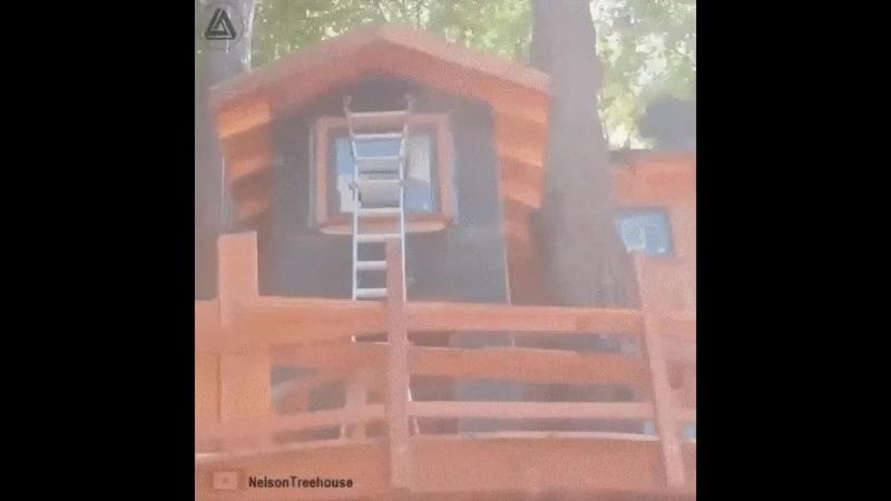 дом-на-дереве.mp4