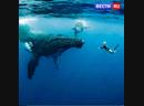 Ханна Фрейзер - девушка, танцующая с китами. А вы бы хотели так поплавать?