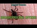Энцефалитный клещ как био оружие, Андрей Тюняев / Encephalitic tick as a bio-weapon, Andrei Tyunyaev