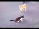 Песик с котом на прогулке )