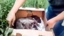 Алиса живи Спасение брошенной кошки с переломами kicked the cat and broke the bones