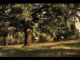 Дерева (Евгений Бачурин)