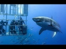 Discovery Channel Shark Week 2018 Shark Cage Diving