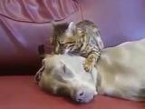 Слушай только мой голос Ты любишь кошек Ты никогда не будешь гонять больше кошек Кошки - твои друзья