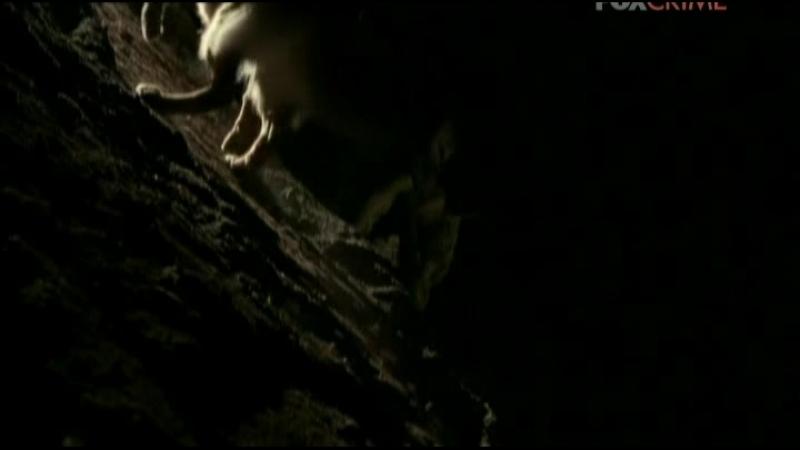 Komissar.Reks.(13.sezon.06.seriya.iz.12).2011.XviD.TVRip