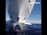 Дельфин плывёт наперегонки с огромной яхтой