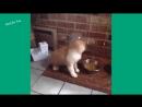 Шутки и Приколы про Котов