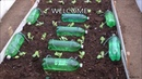 How to make Self Watering System for your Plants using waste Plastic Bottle and a Rope